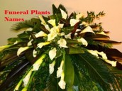 An Internal Examination Of No-Hassle Methods Of Funeral Plants Names