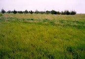 What is a Grassland Biome?