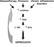 Het ontstaan van depressie