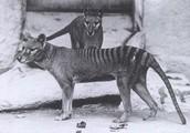 Critical Info/Endangerment