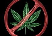 Chemicals in Marijuana