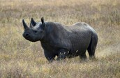 STOP POACHING THESE BEAUTIFUL CREATURES