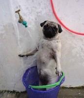 Washing Your Body