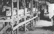 Hitler's Concentration camp
