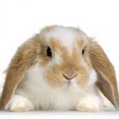 Fuzzy Bunny Jackson