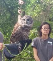 Boyd Hill Nature Center