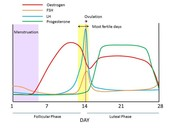 Hormone levels throughout the Menstrual Cycle