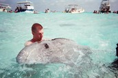 Kissing a stingray = 7 years good luck!