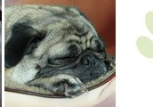 Join in the Pug Events