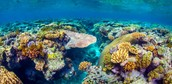 What is the Great Barrier Reef?