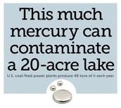 Stop Mercury Now Campaign