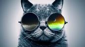 Cool Cat Says...