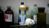 The Price of Extinguishing Animal Testing