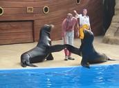 Our Sea Lion Shows!!