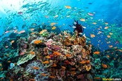 These are healthy coral reefs.