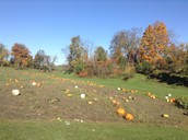 At the pumpkin patch field trip:)