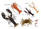 Crustaceans (C)