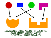 Metabolic Processes and Enzymes