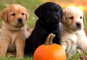 Puppys will be adopted all day