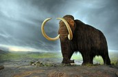 Extinction of species..