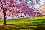 Spring Break~