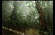 Monsoon Rainforest