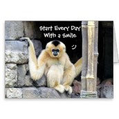 The monkey climbed  the pipe and said start every day with a smile
