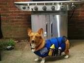 What is Go Cook for Your Pet Day