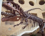 Fernbank Field Trip on Thursday!