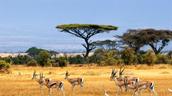 Africa Grassland Tropical Savannas