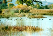 The 4 types of wetlands