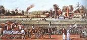 Example cotton plantation.