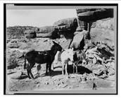 History behind donkeys