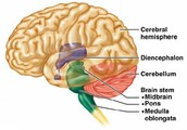 Functions of the Major Regions of the Cerebral Hemisphere