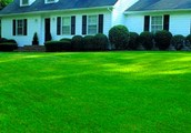 Artifical growing and cutting grass