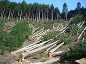 Deforestation Causes Our co2 To Grow