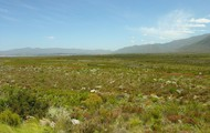 Grasslands!