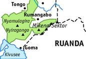 Gorillagruppen im Virunga-Nationalpark