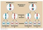 What is genetic variation?