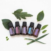 Experiencing Essential Oils ~ Spring Clean!