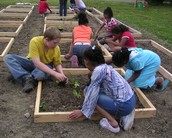 Roxy plants gardens with the community.