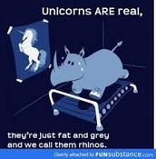 rhino's are called chubby unicorns