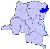 Ituri Forest in The Democratic Republic of Congo