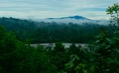Overview of the Amazon Rainforest