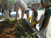 Planting our Butterfly garden - Prep 2CNe