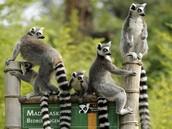 #2 Madagascar