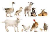 Misconception #1...Evolution & Natural Selection