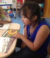Daniela reading about insects and plants.