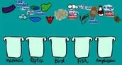 5. Animal Characteristic Game