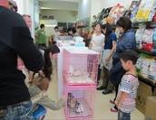 台北愛貓協會送養會